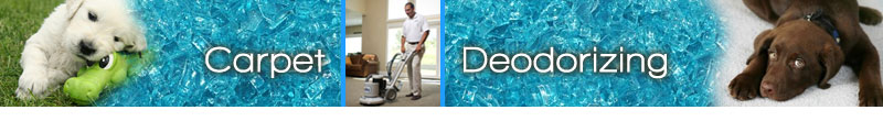 Carpet Cleaning NY-Westchester